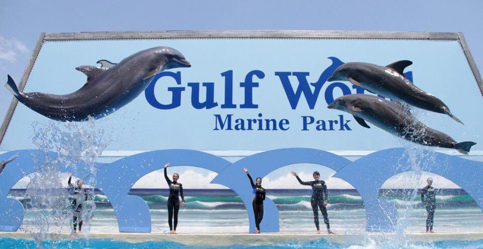Bottlenose Dolphin Show Gulf World Marine Park