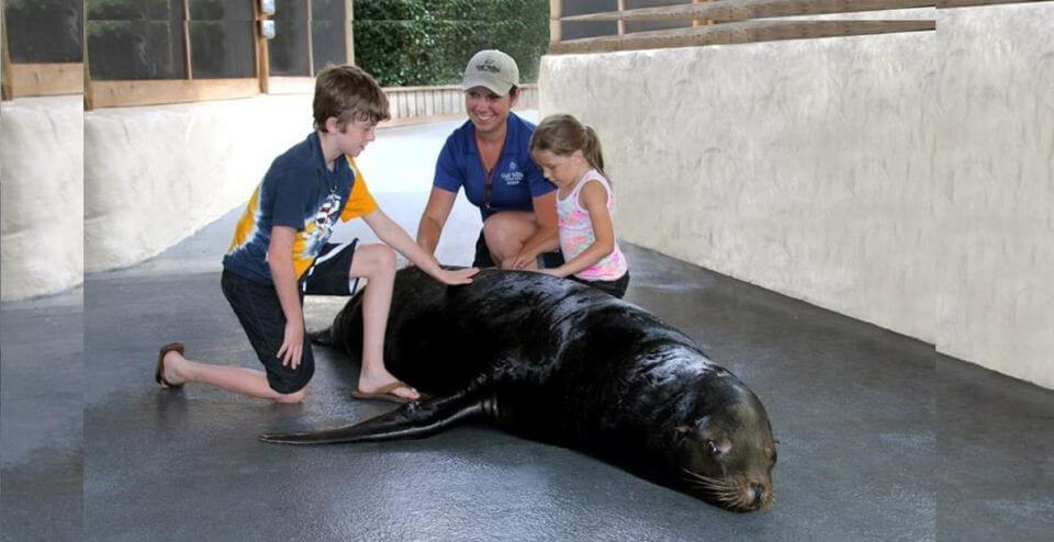 sea lion meet n great panama city beach