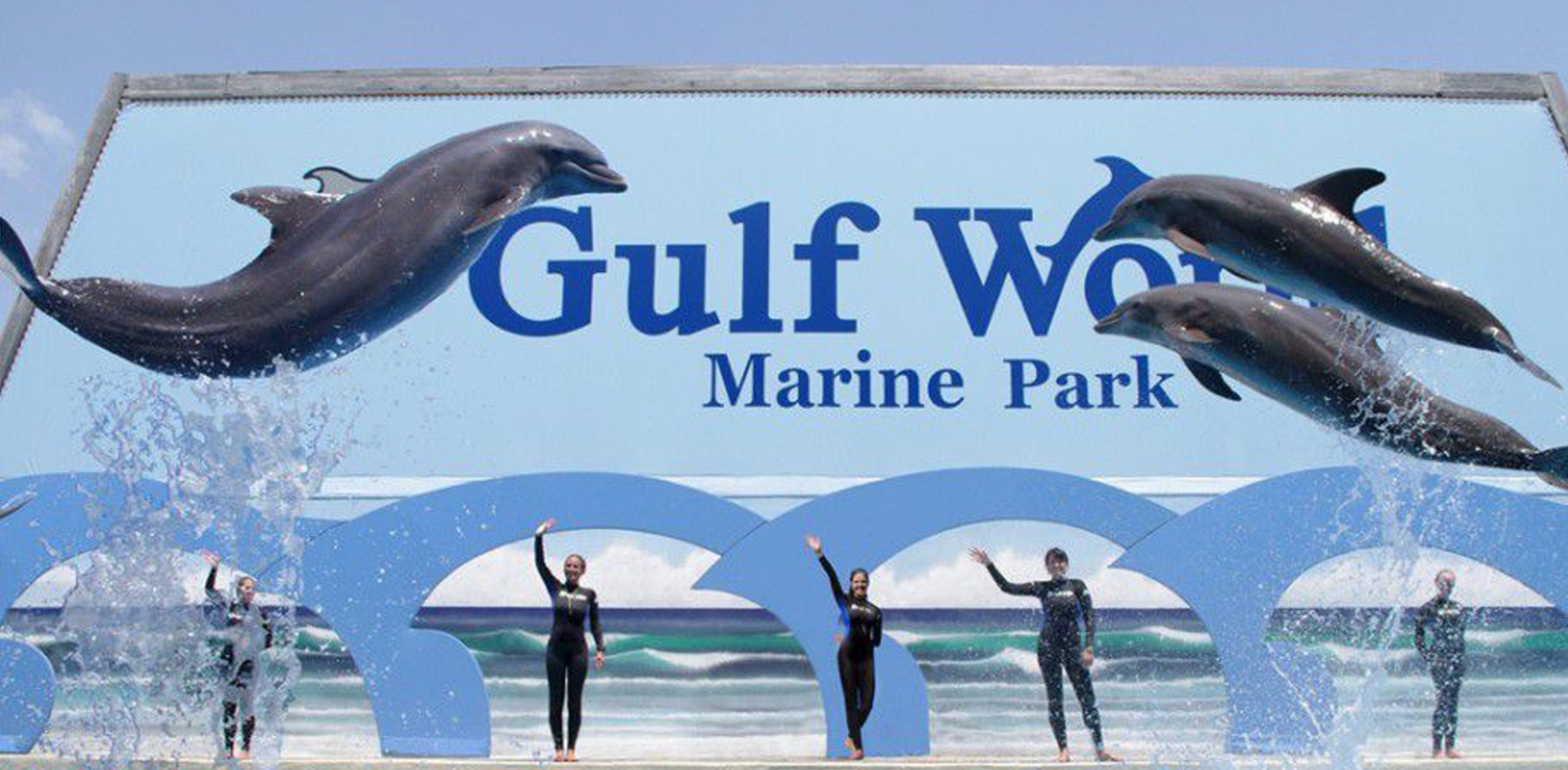 Bottlenose-Dolphin-Show-Gulf-World.jpg