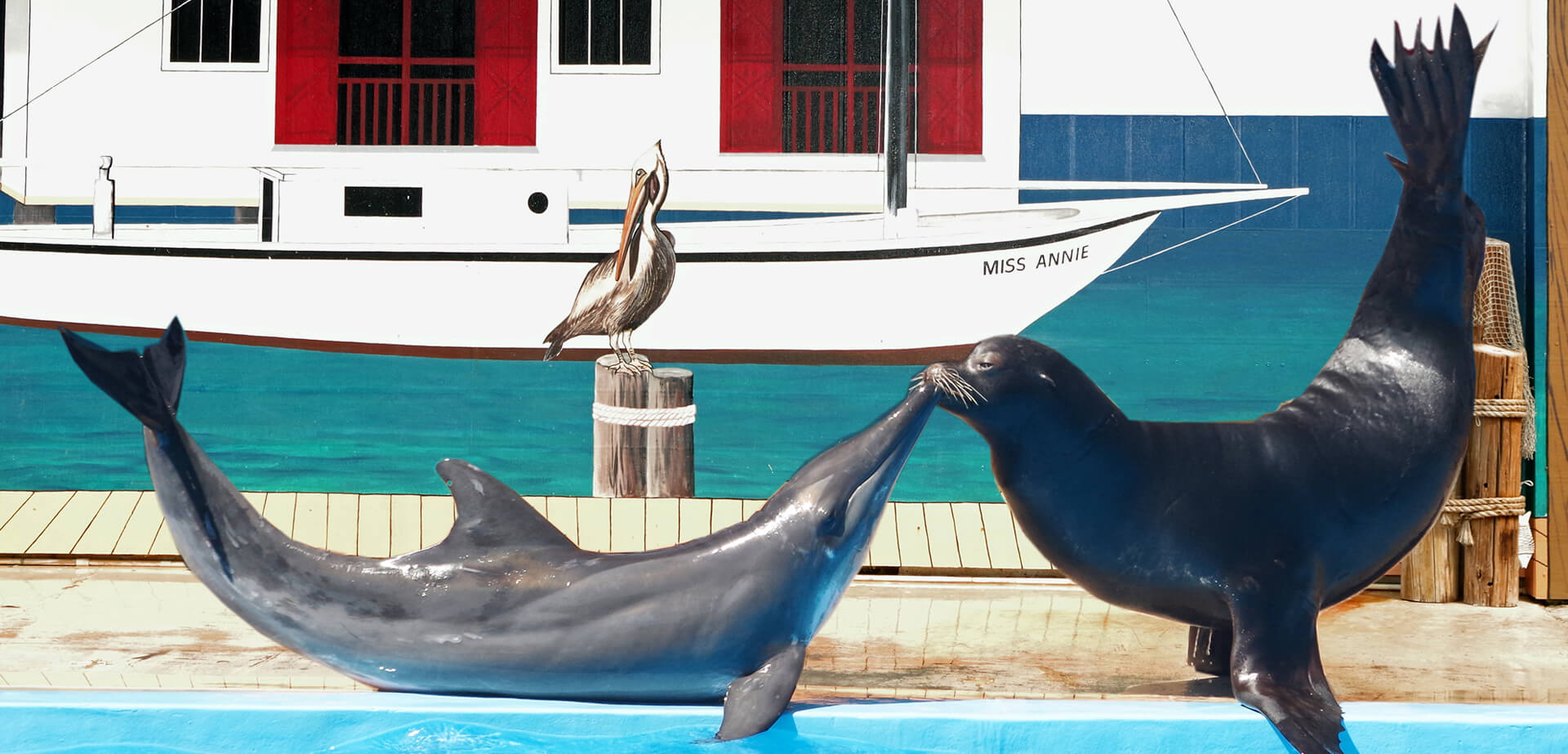 rough-toothed-and-sea-lion-kiss-gulf-world.jpg